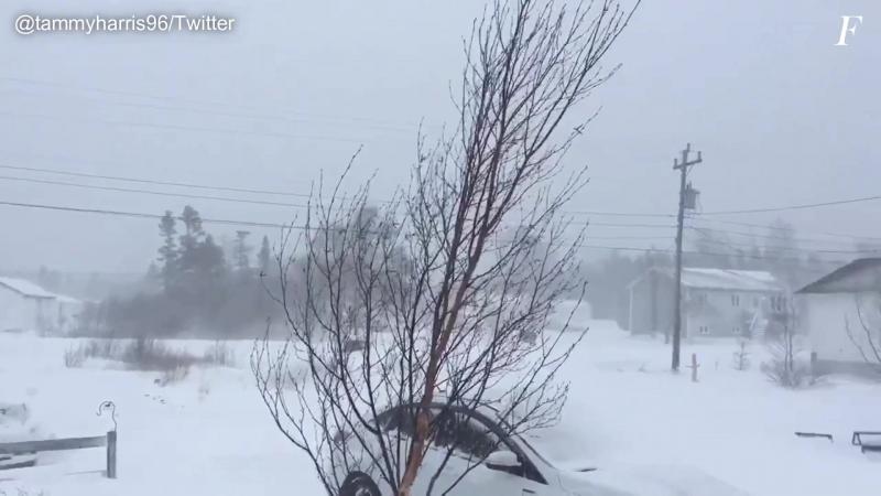 За несколько дней до лета Канаду засыпало снегом ¦ Snow in Gander Canada 24 05 2018