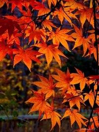 Отцвели цветы, падают листья, птицы молчат, лес пустеет и затихает.ОСЕНЬ. - Страница 6 UhWDx64PJYg