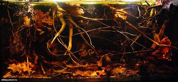 Конкурс дизайна биотопных аквариумов JBL 2014 FDT-xO8akVI