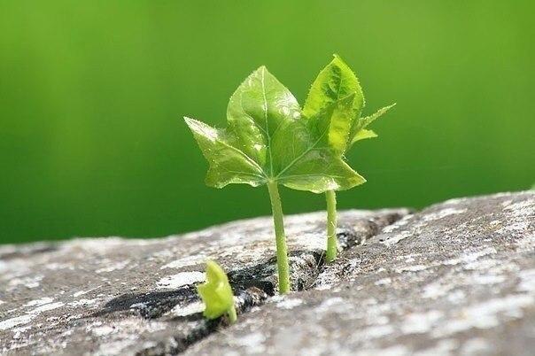 Если у вас есть мечта, желание и настойчивость – вы прорастете даже сквозь асфальт.