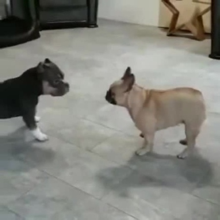 Dogs ∩ ͡° ͜ʖ ͡° ⊃━☆゚ * ・ 。゚