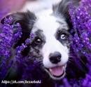 Нереально красивые фотографии собак от польского фотографа Алисии Змысловска