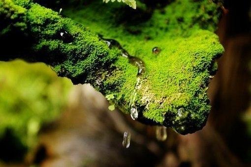 В мире нет ничего более привлекательного, чем естественность.