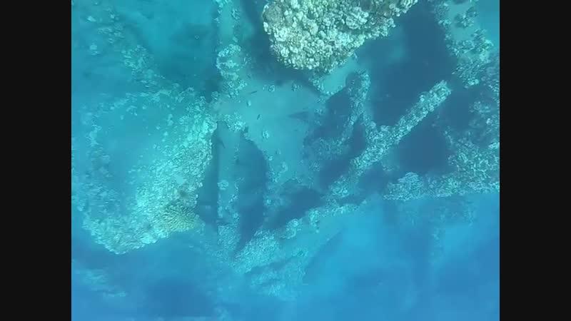 Правда пугающе под водой выглядят руины оставшиеся после цунами А черепашка молодцом Не парится вообще Алек