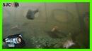 Китайская раколовка ЗОНТИК девять входов Камера SjCam 4000 внутри раколовки