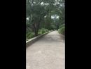 Парк Воронцовского дворца