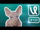 Лучшие ролики недели #150 О кий, Гуул, я гиде?