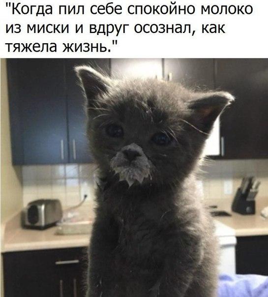 Фото №456247378 со страницы Валерии Сагацкой