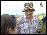 Наш фермер - лучший пахарь