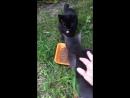 Голубой котик и черная кошечка