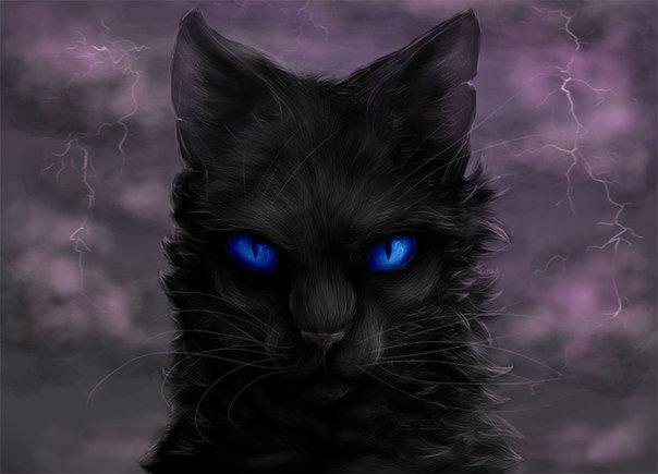 Коты воители картинки самые красивые - c4