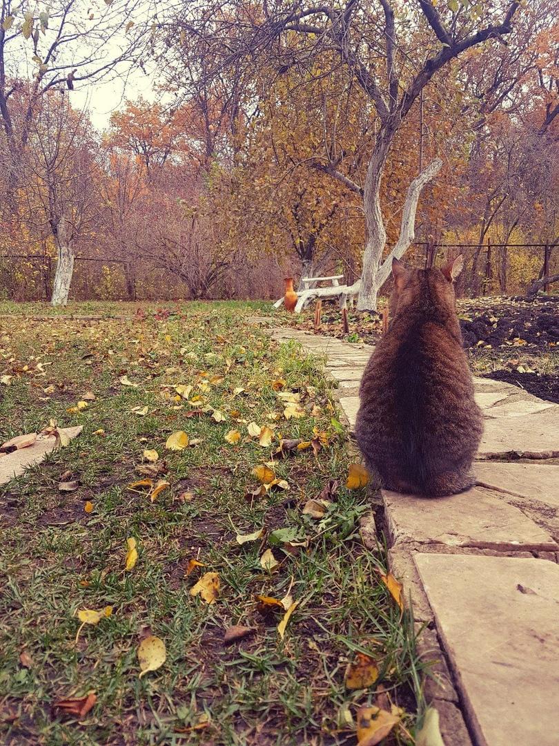 Осенний кот🍁🍂