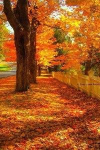 Отцвели цветы, падают листья, птицы молчат, лес пустеет и затихает.ОСЕНЬ. - Страница 6 DtZenh0z9yM