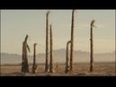 Muerte Pan Alley Desert March
