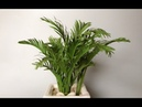 ABC TV | How To Make Golden Cane Palm Tree Paper - Craft Tutorial