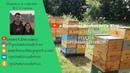 Иан Степплер: год на промышленной пасеке (Манитоба, Канада)