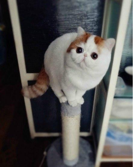 самый милый кот в мире