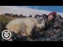 Белый медведь Фильм Ю Ледина 1975