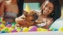 T-Pain - It's My Dog Birthday