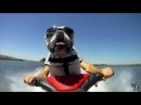 Animals Are Awesome 2013 HD