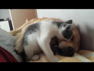 Котик достал собакена