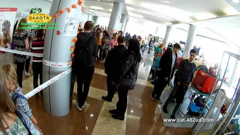 20102018, Харьков, Выставка кошек, RUI, Локомотив, часть 11, работа ринга, эксперт