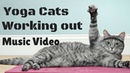 Yoga Cats - Working out in the Gym