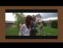 Атмосферное свадебное видео Хотите так же Для заказа съемки отправляйте сообщение в ЛС Счастливая невеста и влюбленный жени