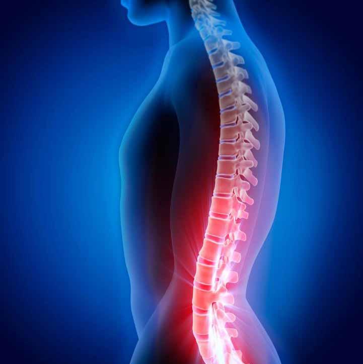 Позвоночник человека служит для защиты пучка нервов, известного как спинной мозг.