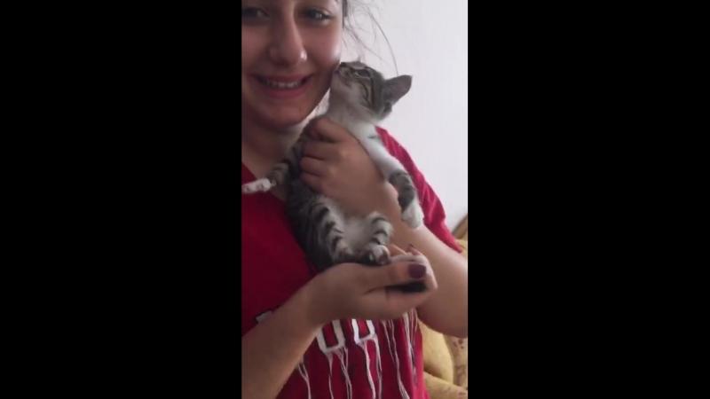 Dün bize küçük minnoş geldi. Sokak kedi. Biz ona bir aile bulduk. Mutlu ol canım 😘