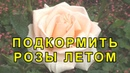 Чем Подкормить Розы Внекорневые Подкормки для Роз