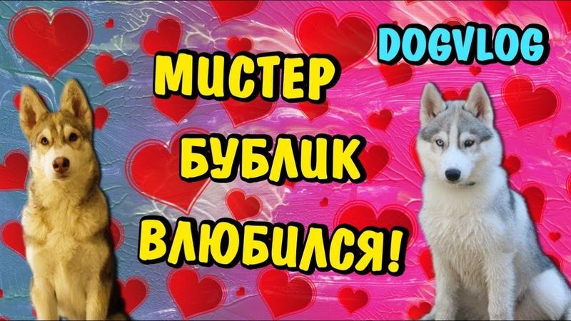 МИСТЕР БУБЛ ВЛЮБИЛСЯ! 10000 ПОДПИСЧИКОВ! НАРЯЖАЕМ ЕЛКУ! Говорящая собака