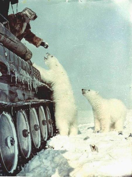1950 г. Белые медведи и сгущенка