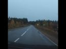 Лоси на дороге в 5 км от финской границы в сторону Алакуртти