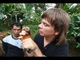 Индонезия. Остров Сулавеси и Калимантане. Охота на летучих мышей. Добыча алмазов. 13 серия