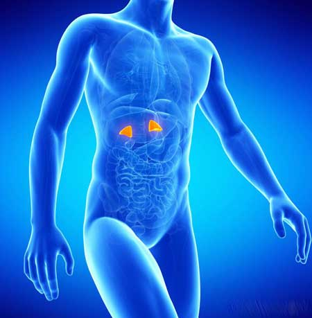 Поскольку преднизон может влиять на выработку кортизола надпочечниками, остановка препарата может вызвать надпочечниковую недостаточность