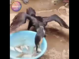 Наловил рыбки