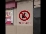 Когда не пускают с котом