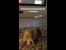 Oh my goodness this video of Hatchi posted by Matt on his Story and Alex's Go on son