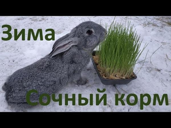 Гидропоника- зеленый корм зимой!Кролики довольны!
