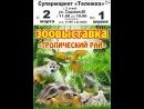 Зоовыставка Тропический рай г. Ржев