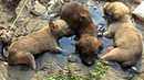 Stuck for hours in rock solid tar puppies rescued Watch til the end
