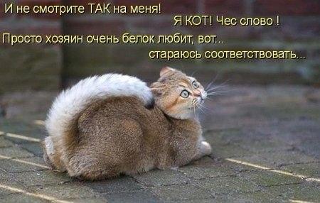 http://cs319330.vk.me/v319330019/338d/H7xMx1T8ma4.jpg