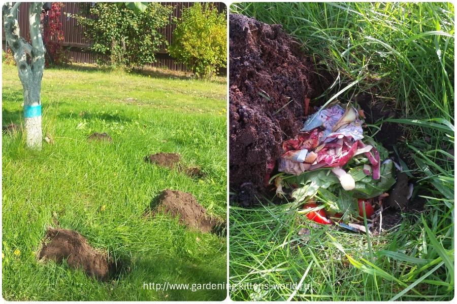Октябрь, основные работы в октябре в саду и огороде