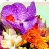 Цветы от Венеры. доставка цветов в Салавате.