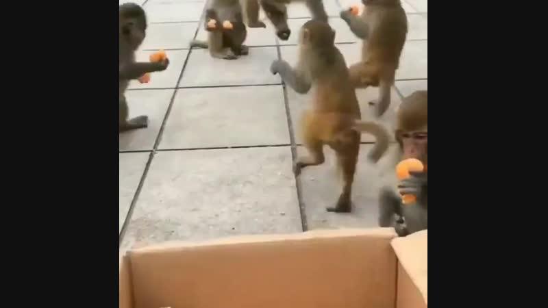 Когда принесла в офис мандаринки и предложила коллегам угоститься.mp4