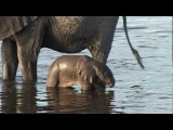 Baby elephant learns to use his trunk