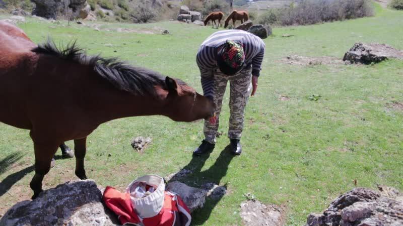 Общительные лошадки