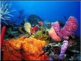 Морское дно(Seafloor)