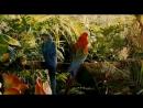 «Джунгли зовут! В поисках Марсупилами» (2012): Трейлер (русский язык)